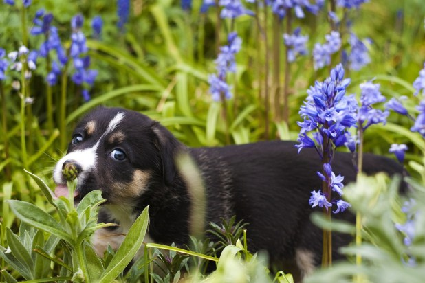 dog-in-flowers