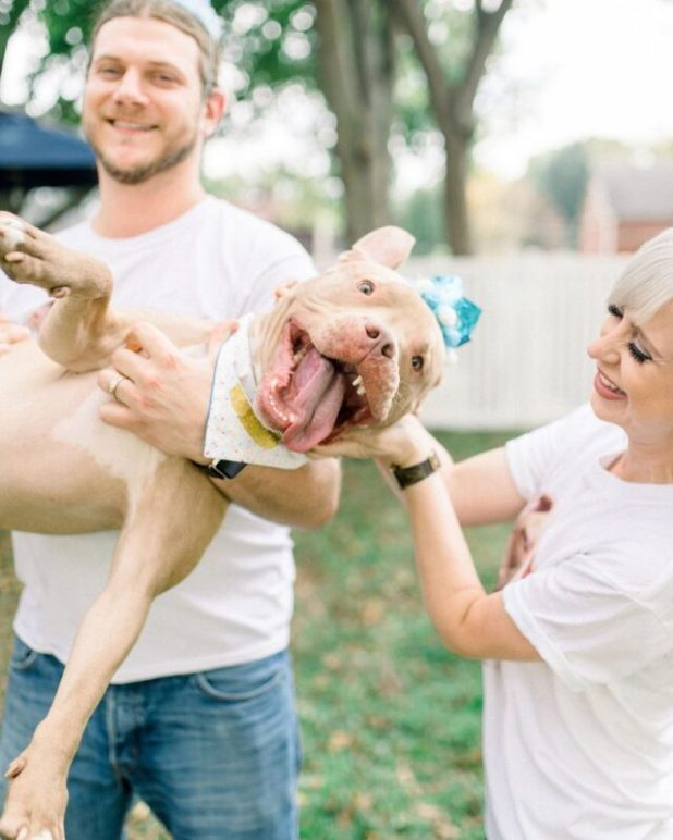 Rescue Pit Bull's party