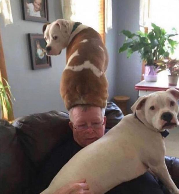 funny-dog-sitting-on-head