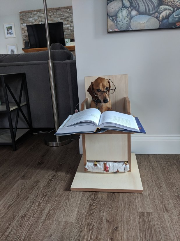 dogs-studying