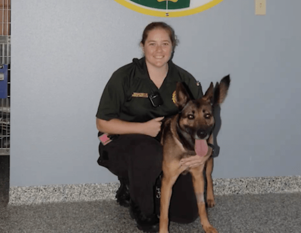 Rescue German Shepherd and Officer