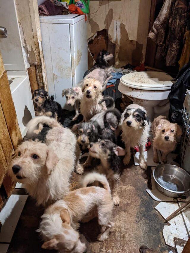 Casa imunda e cachorros abandonados
