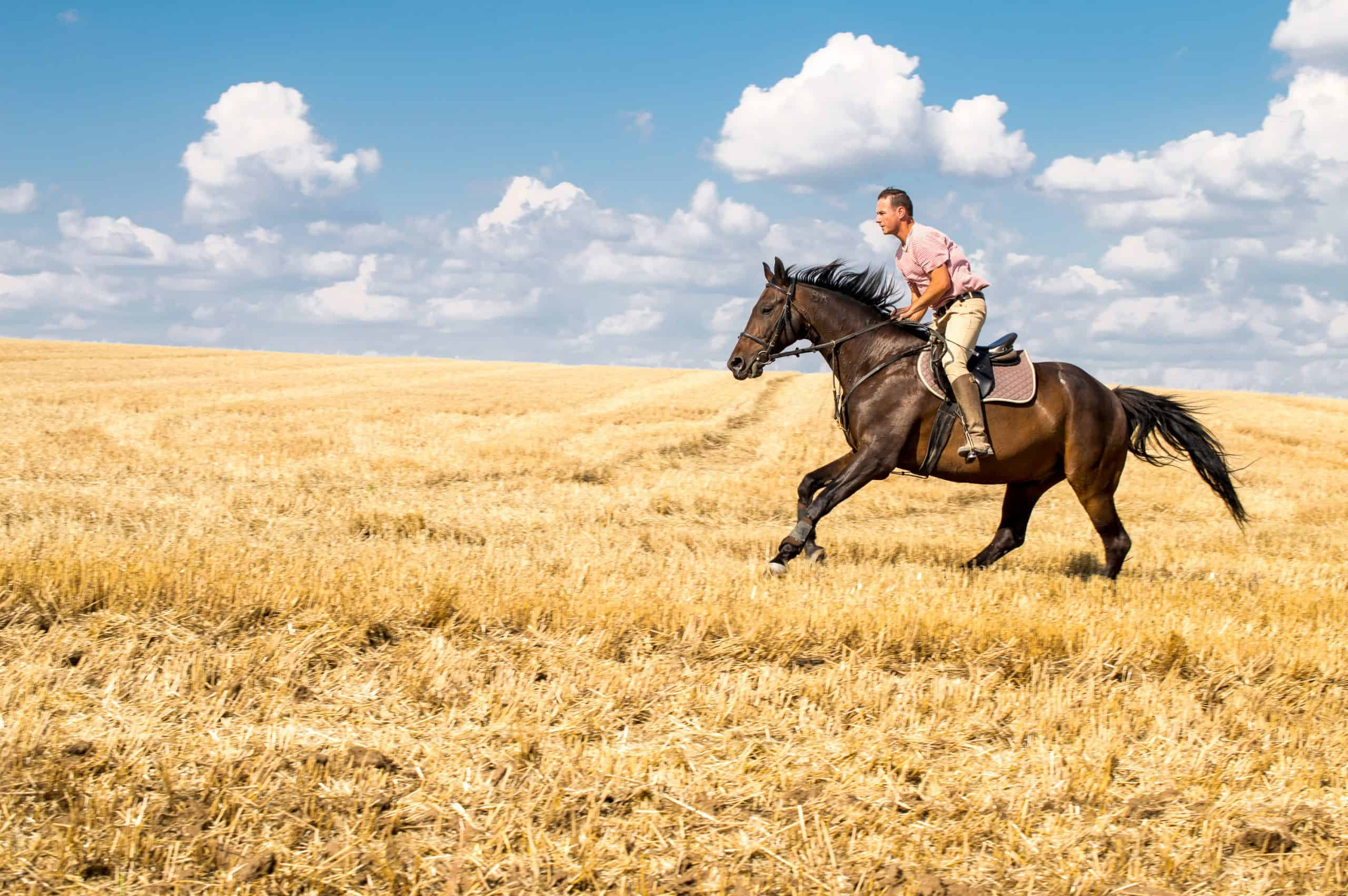 Man ride horse on field - freedom and hapiness