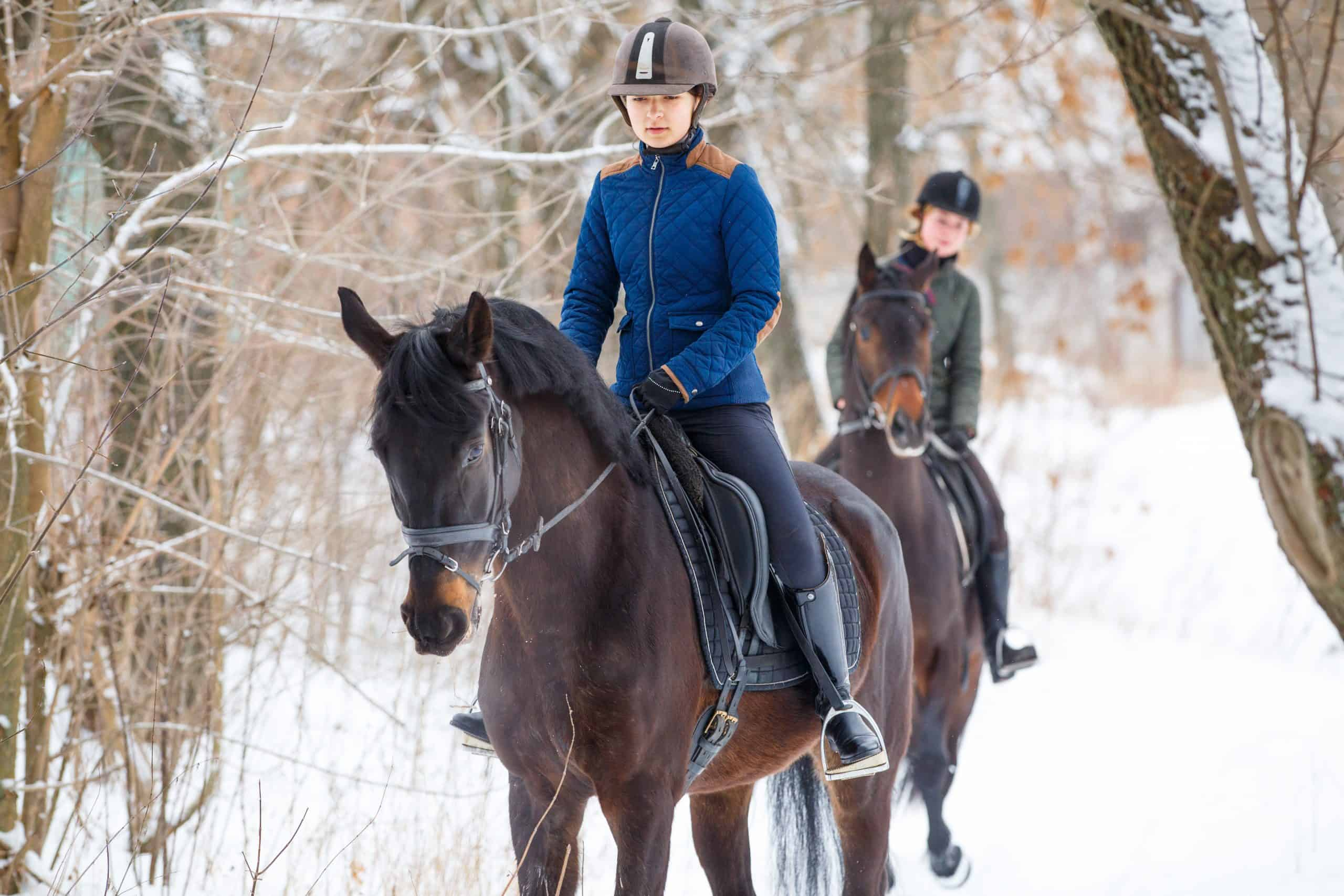 Two sportswomen riding hers bay horses in winter park. Equestrian winter activity background