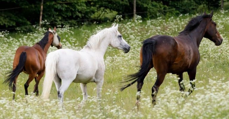horse tail growth tips