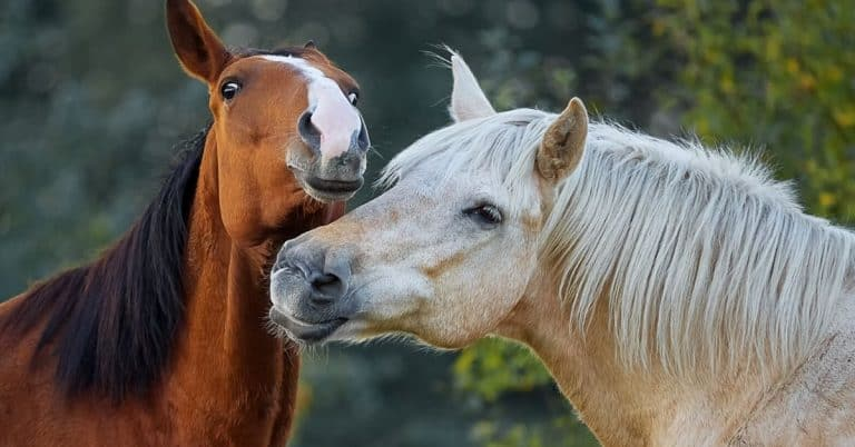 two horses hanging out