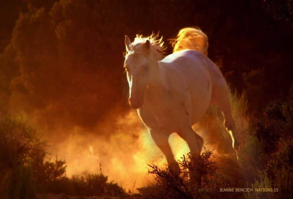 Chief runs with the wind and fiery sunlight, By Jeanne Bench Nations