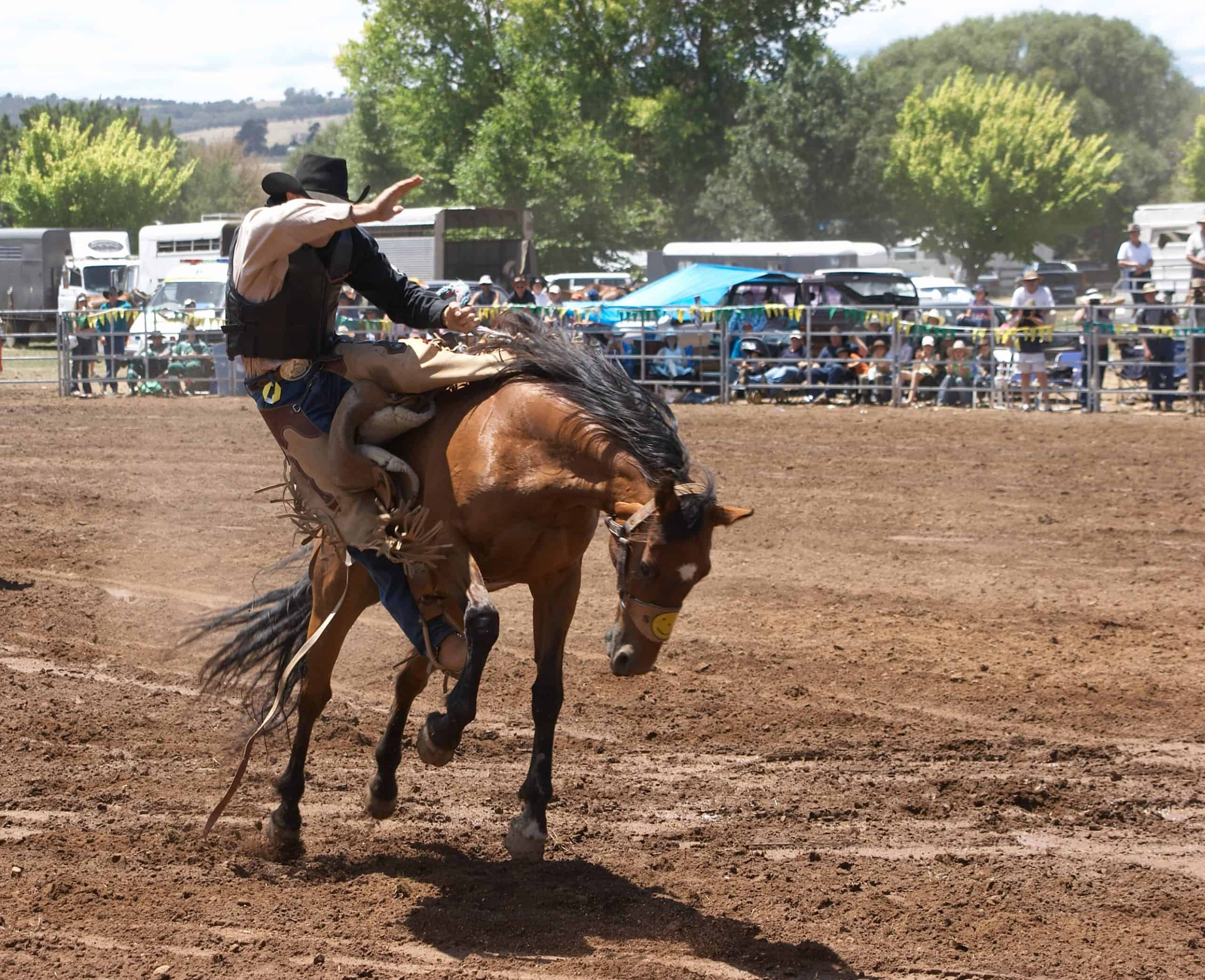 Cowboy riding bucking horse at a rodeo