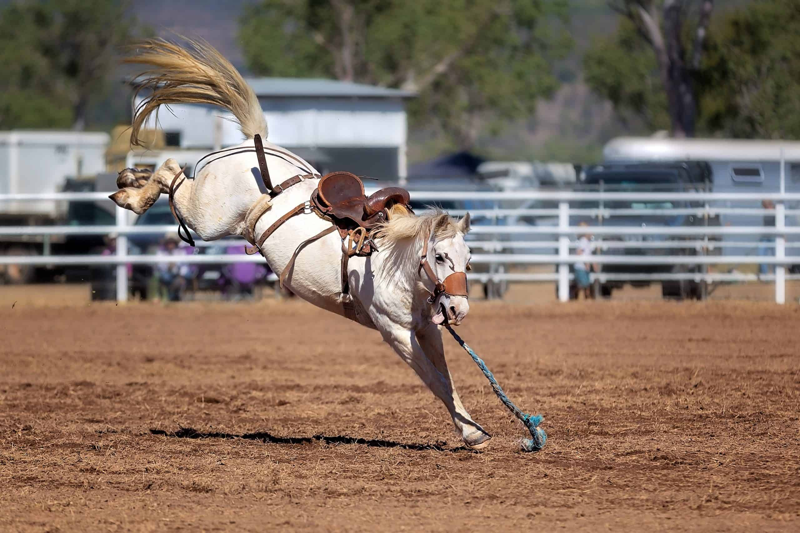 A white bronc with hooves in air after bucking off its cowboy rider competing at a country rodeo