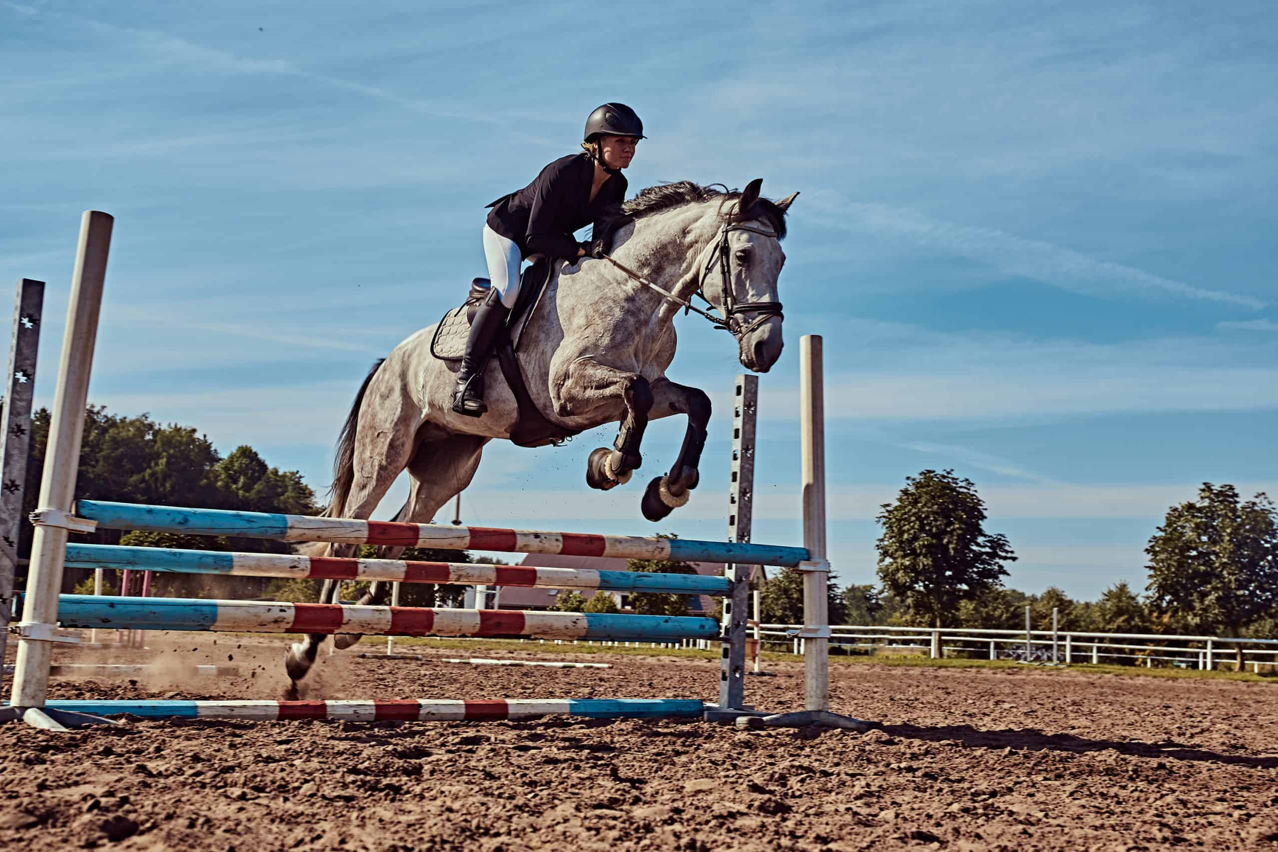 Young female jockey on dapple gray horse jumping over hurdle in the open arena.
