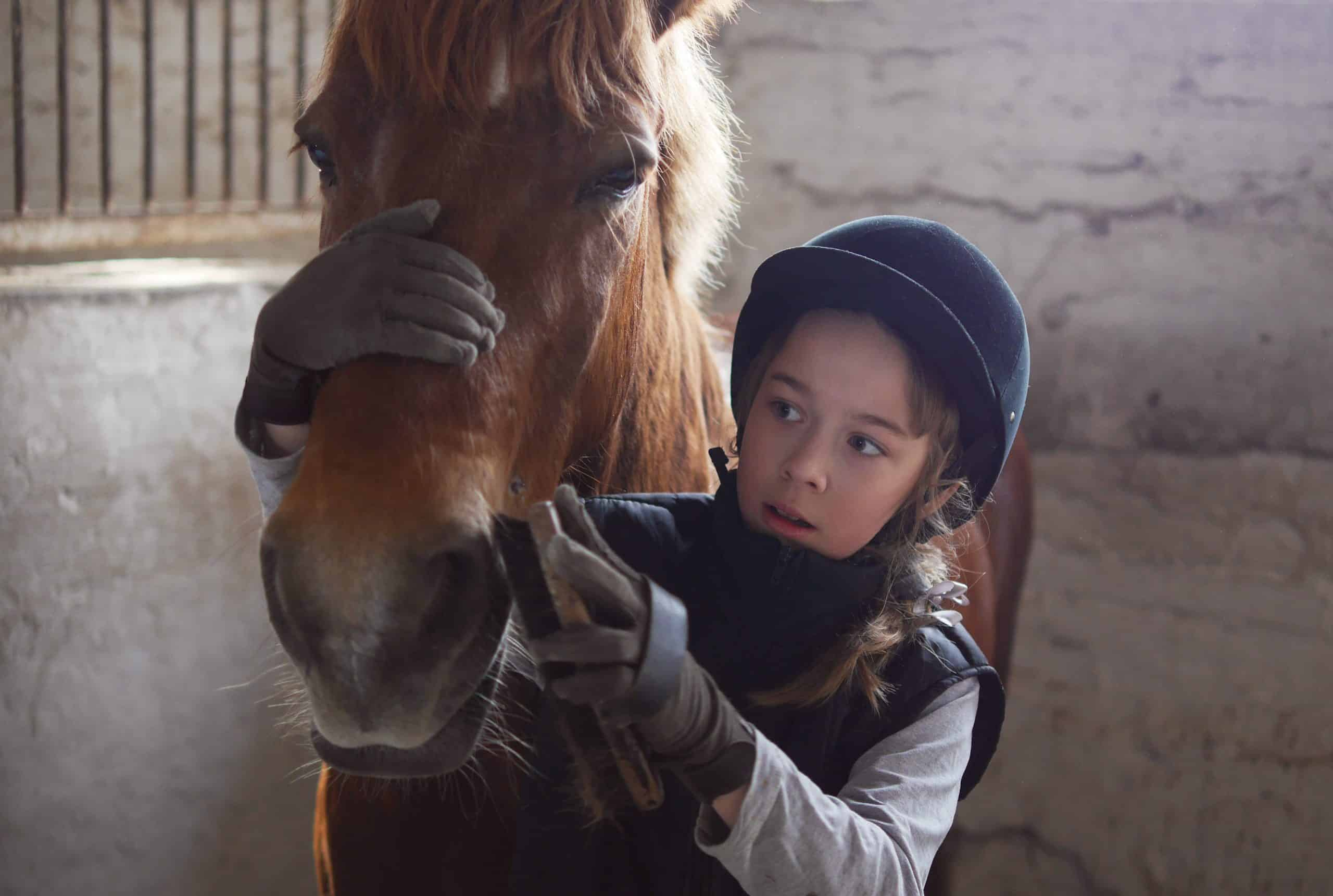Girl brushing her horse. The care of horses. The child brushes the horse's face with a brush.