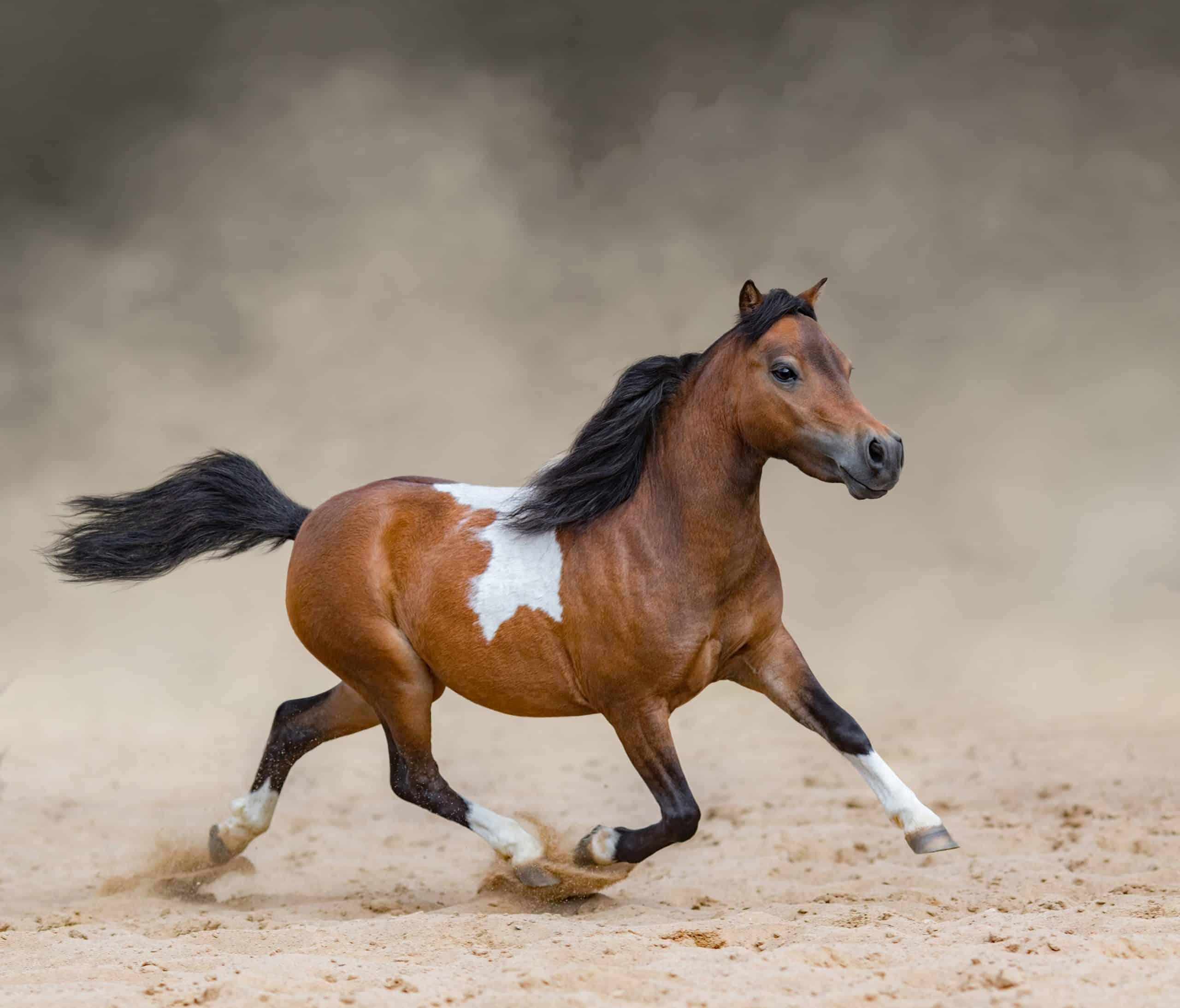 miniature horse race unusual sports