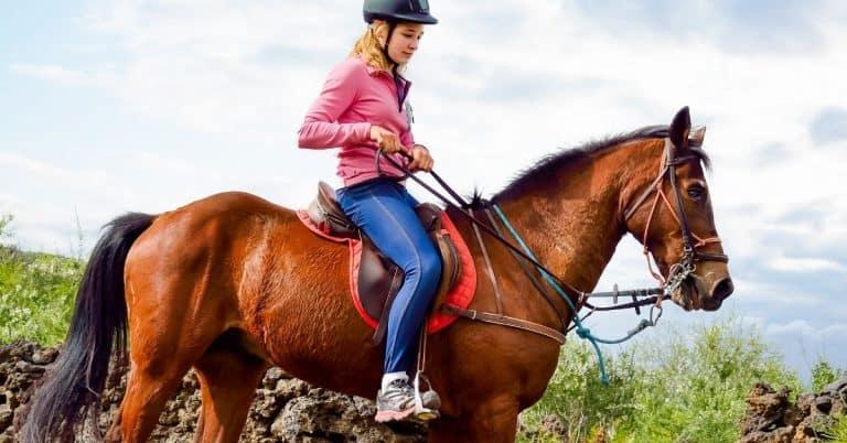 person riding a horse