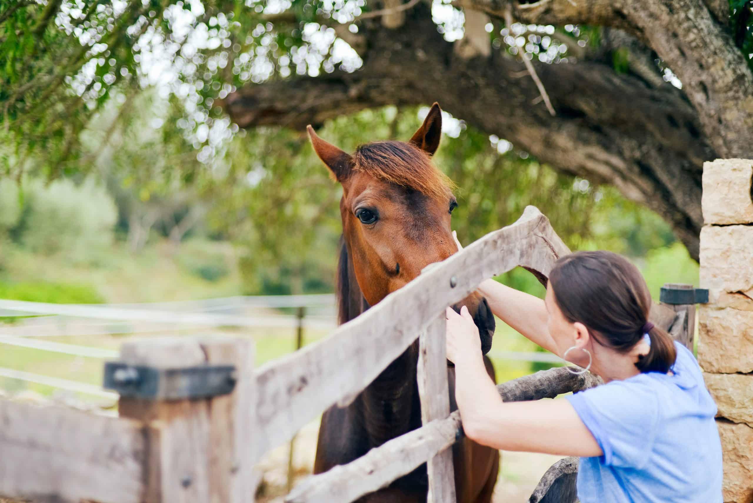 Brunette woman cuddling horse through wooden fence