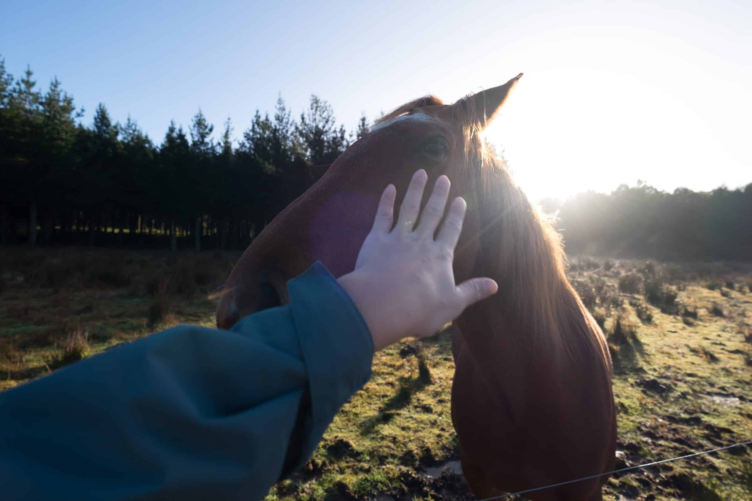 A human hand touches a horse. Animal and human beings are both inhabitants of mother earth. We should treat animals with respect and care just like we treat our own species.