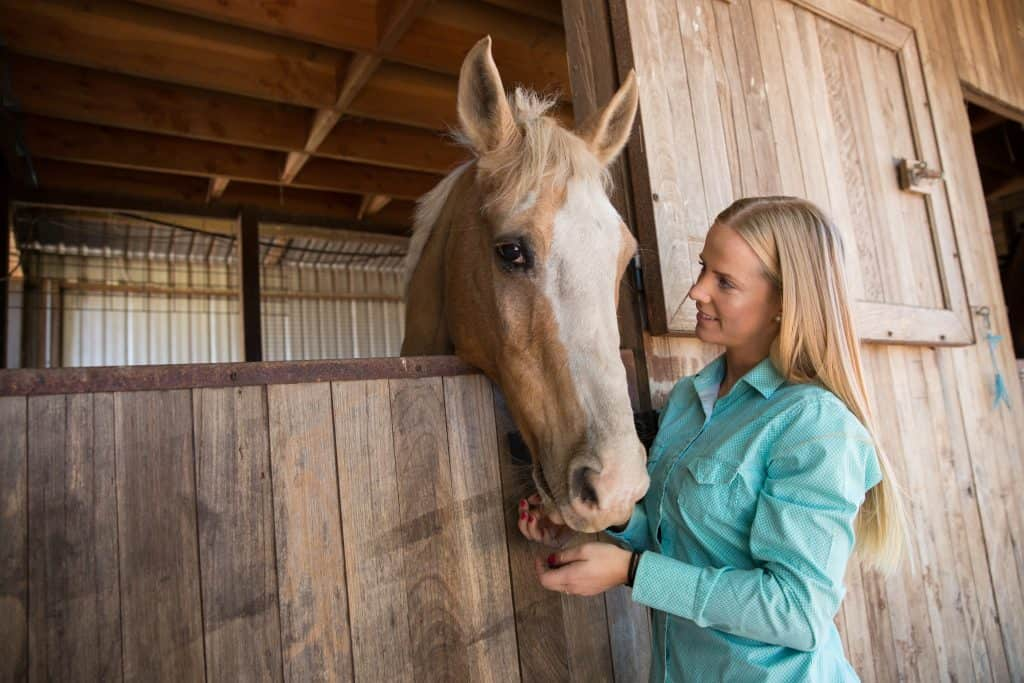 Close up of a horse and rider at the stables