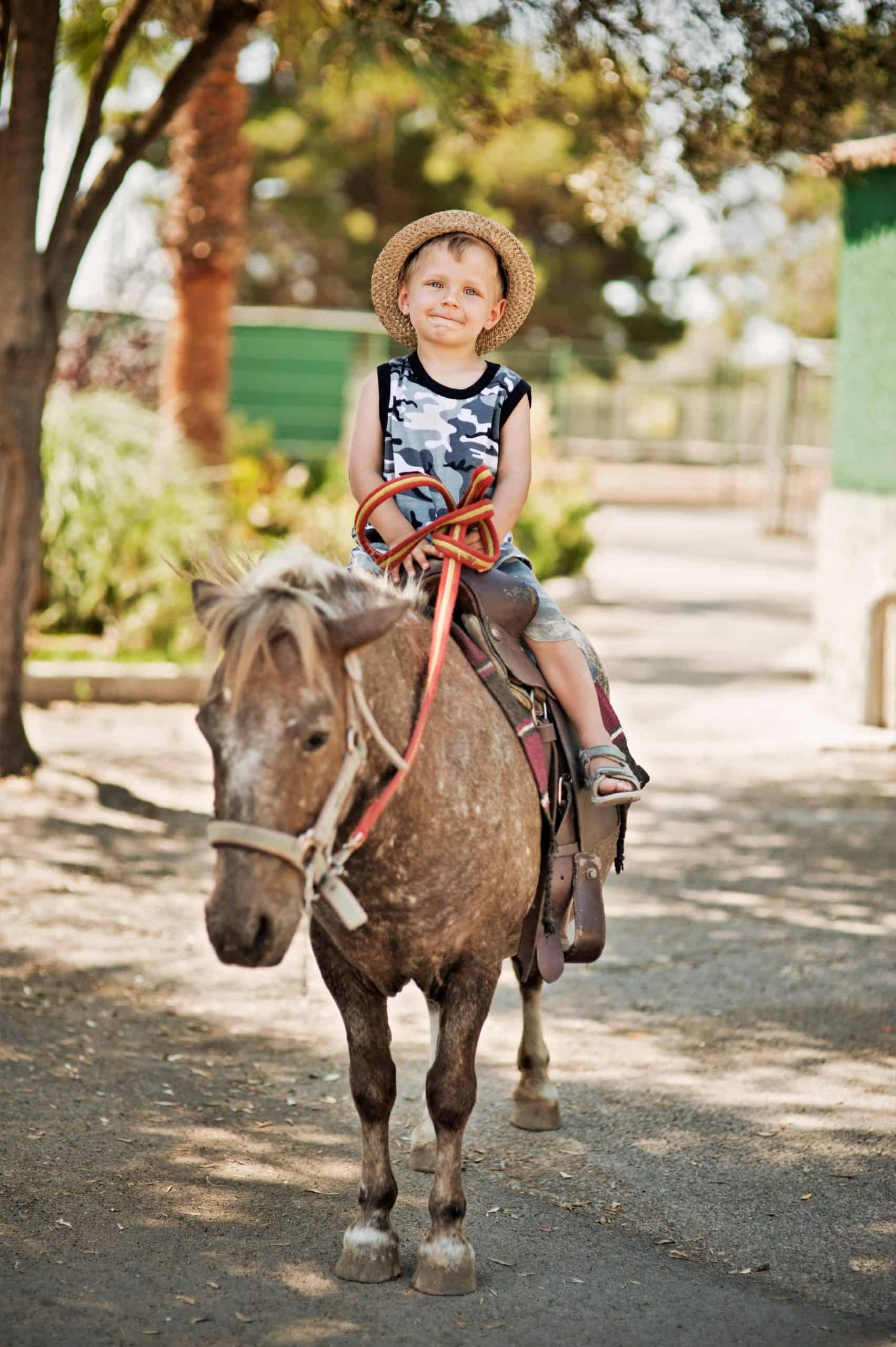 Portrait of a happy little boy riding a equine.