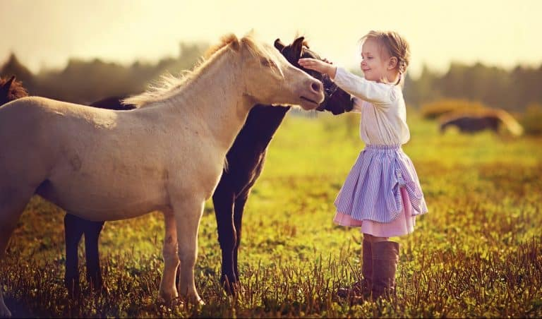 A cute little girl in jockey boots walking among tiny ponies in the field on a sunny summer day
