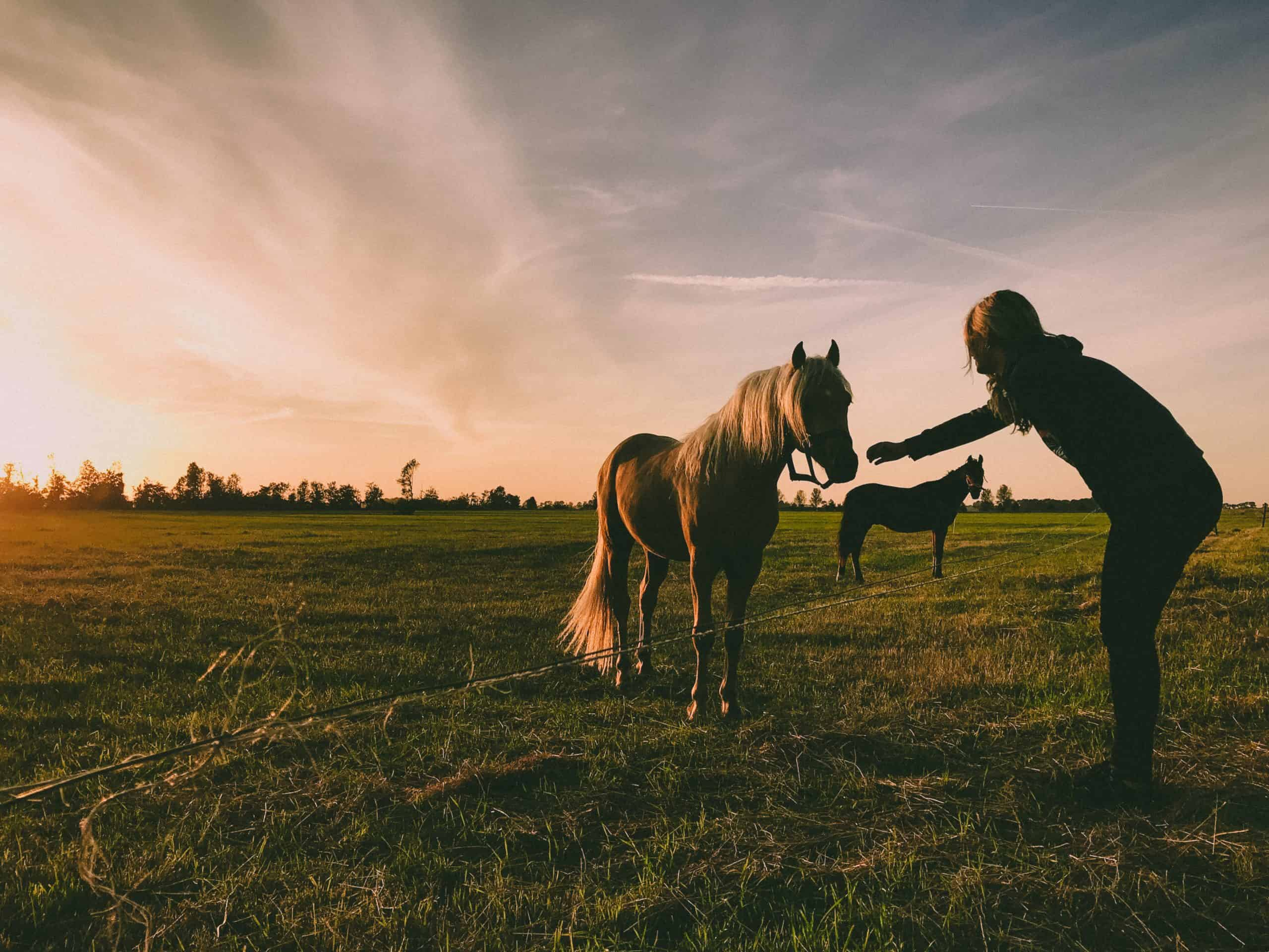 Canva - Photo of Person Near Horse