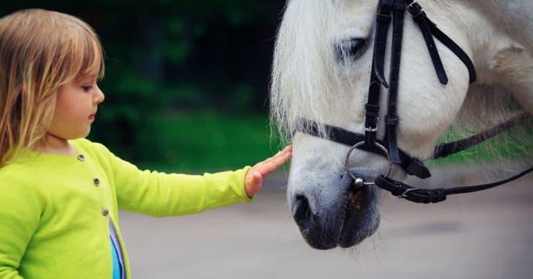 horse crazy kid