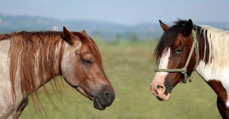 questions to ask when you buy a horse