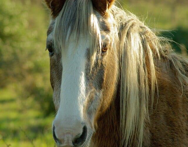 horse-564282_640