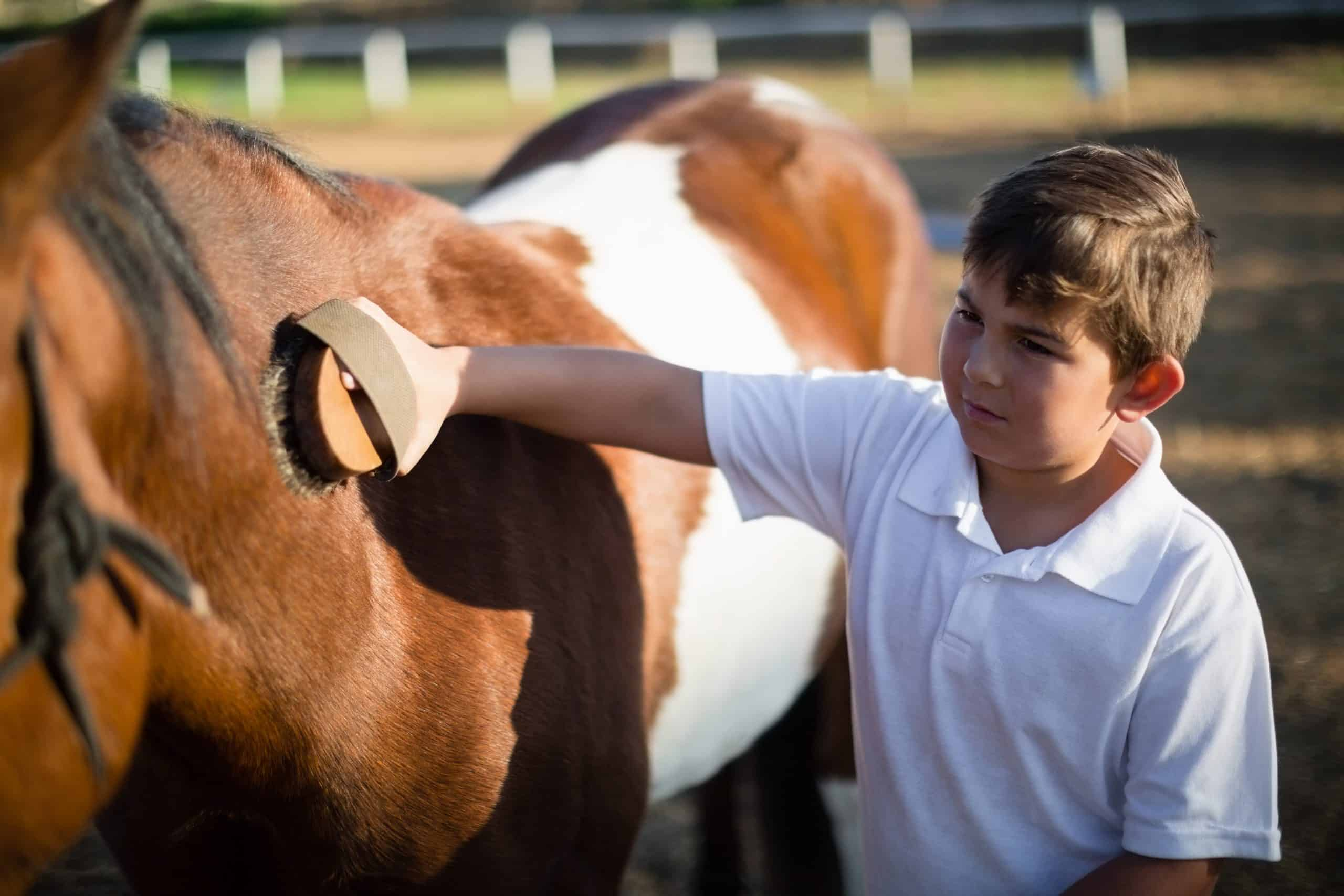 Boy brushing equine in the ranch on a sunny day