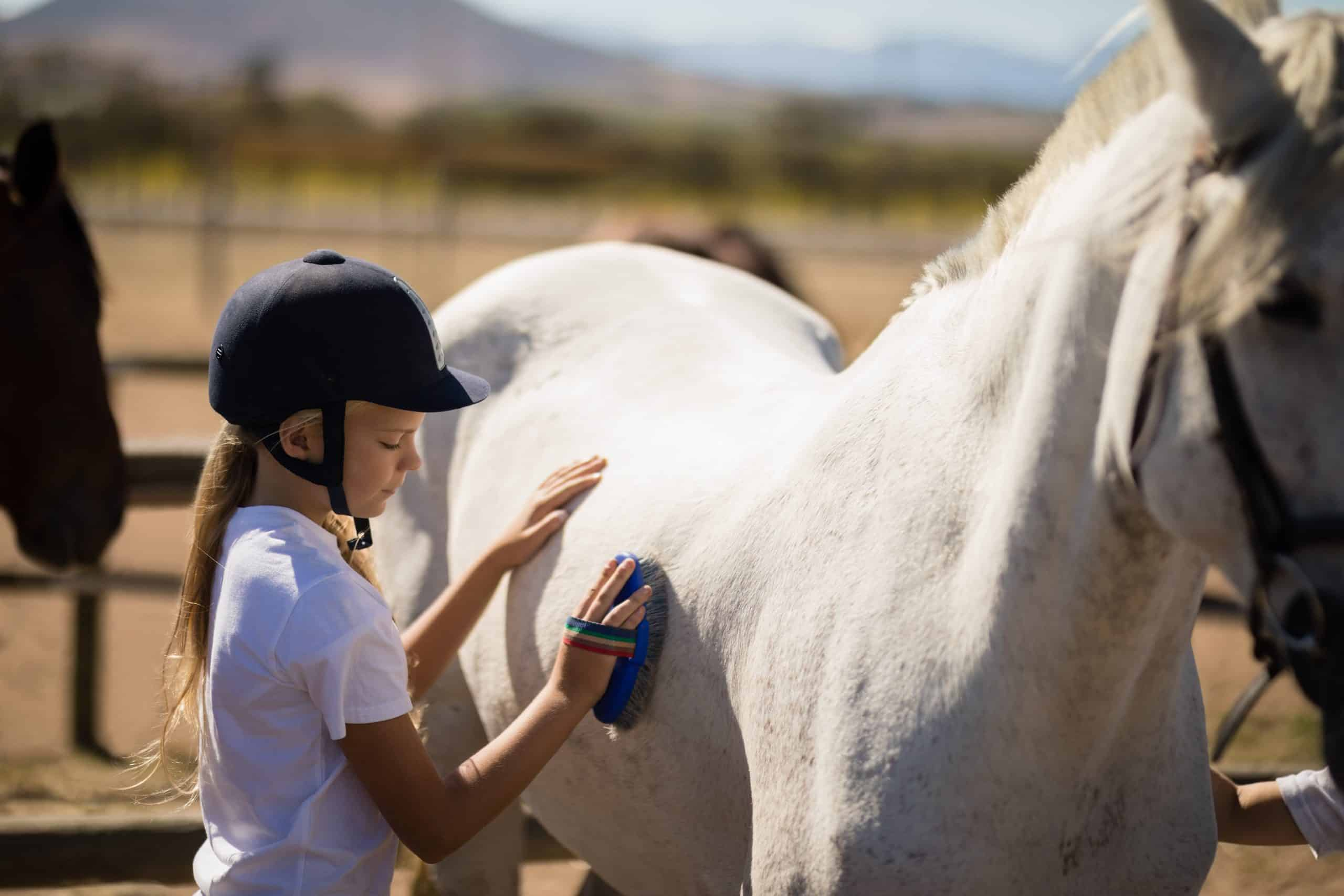Girl brushing the horse in the ranch on a sunny day