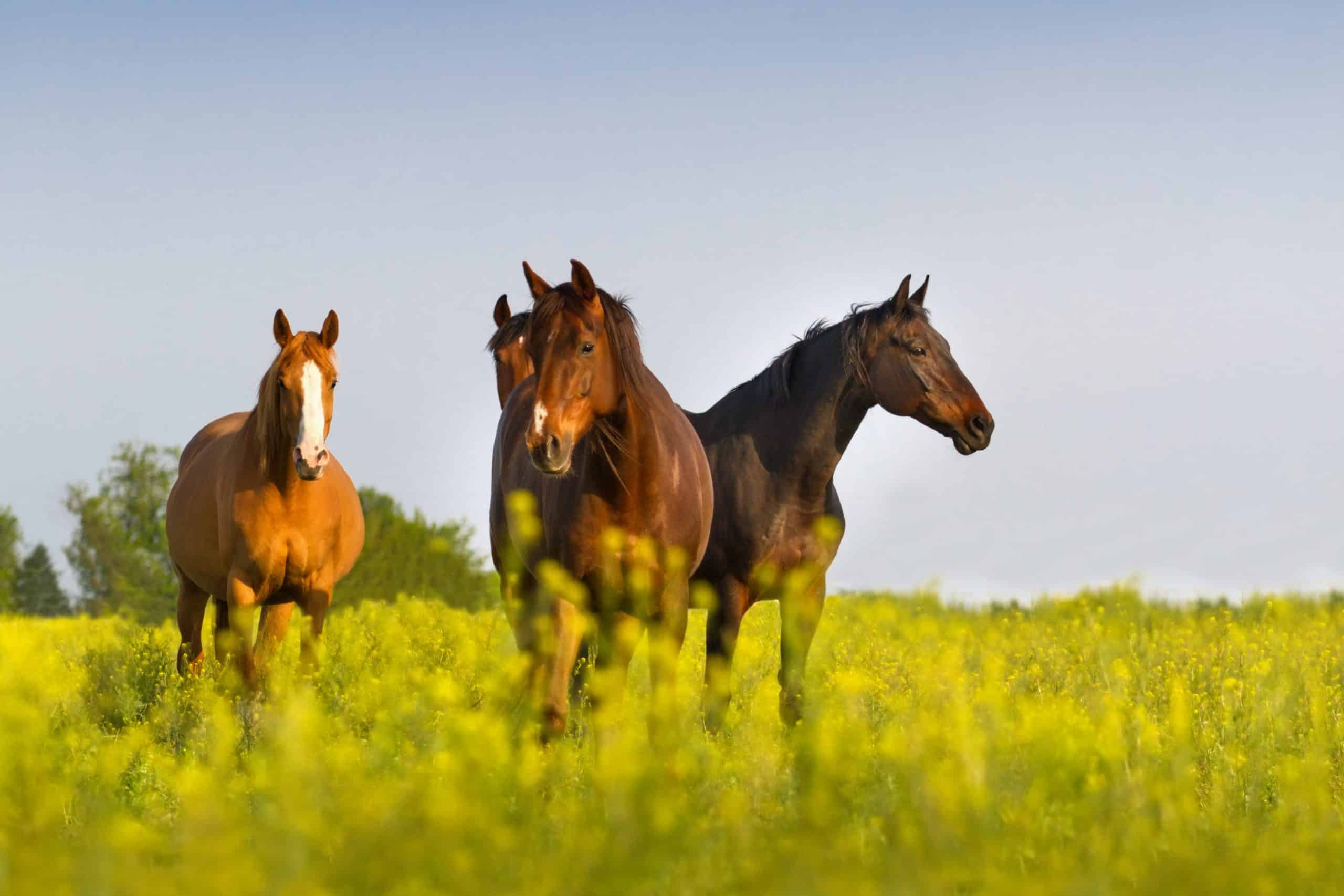Horse herd on pasture against blue sky