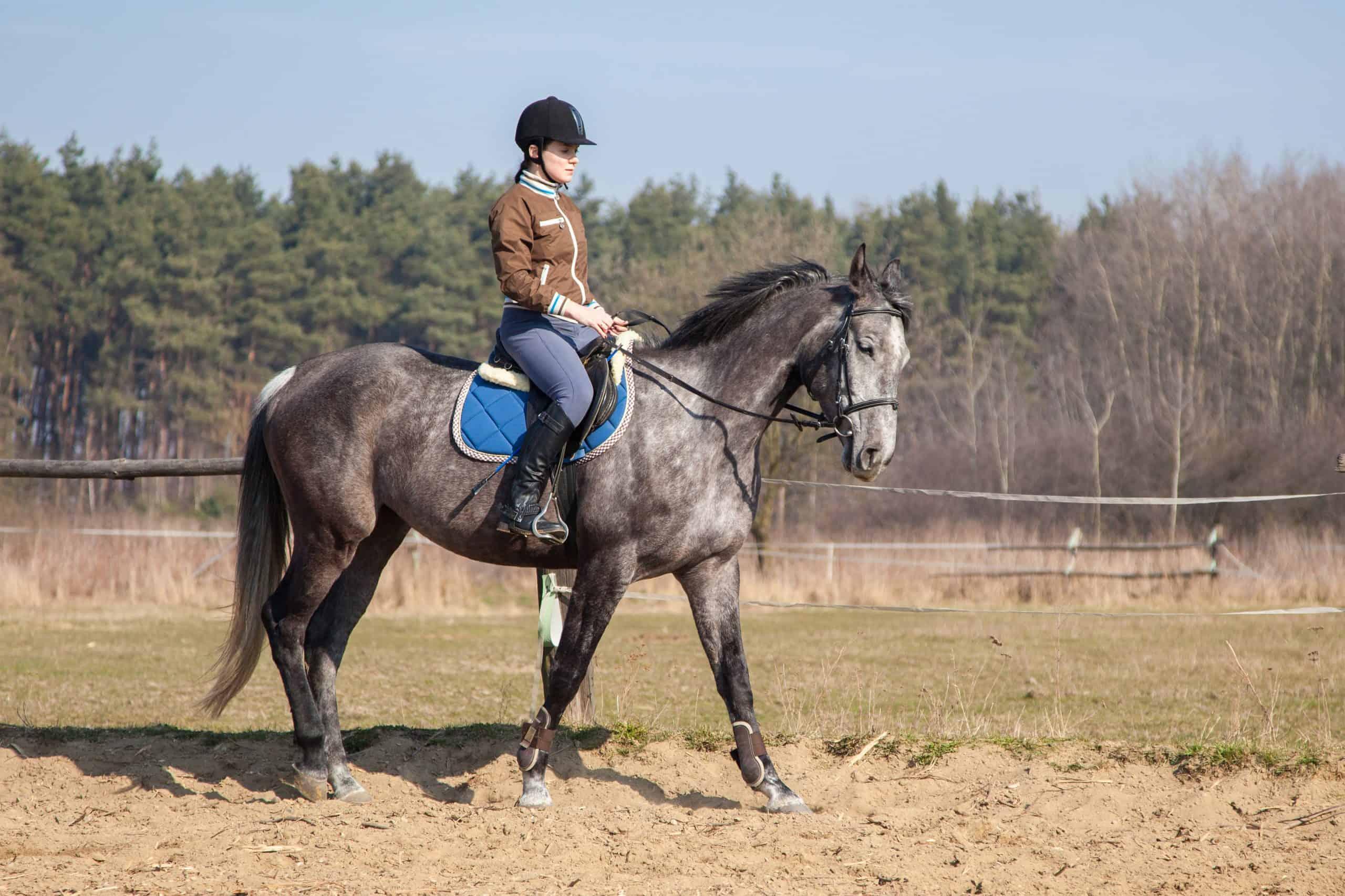stay calm horseback riding