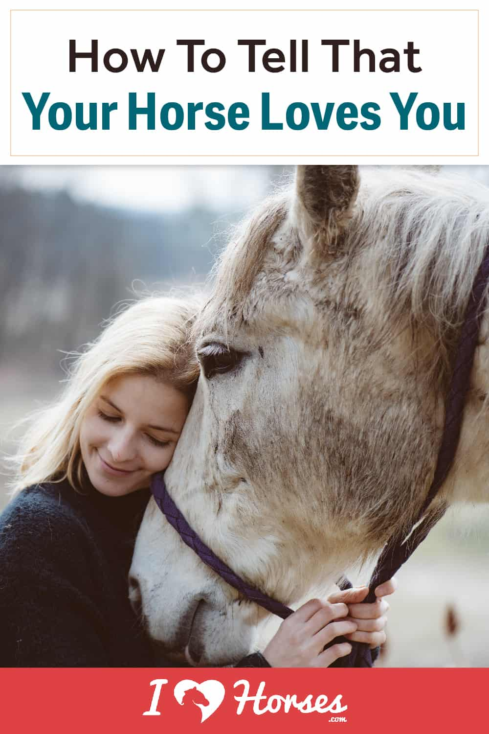 How To Tell That Your Horse Loves You