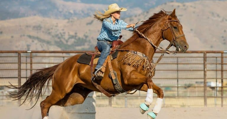 stay calm in saddle