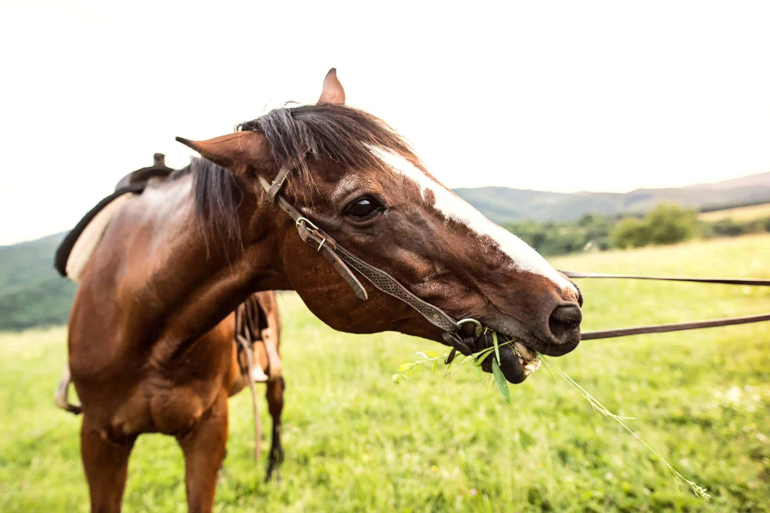 horse in pasture symptoms of ulcers in horses