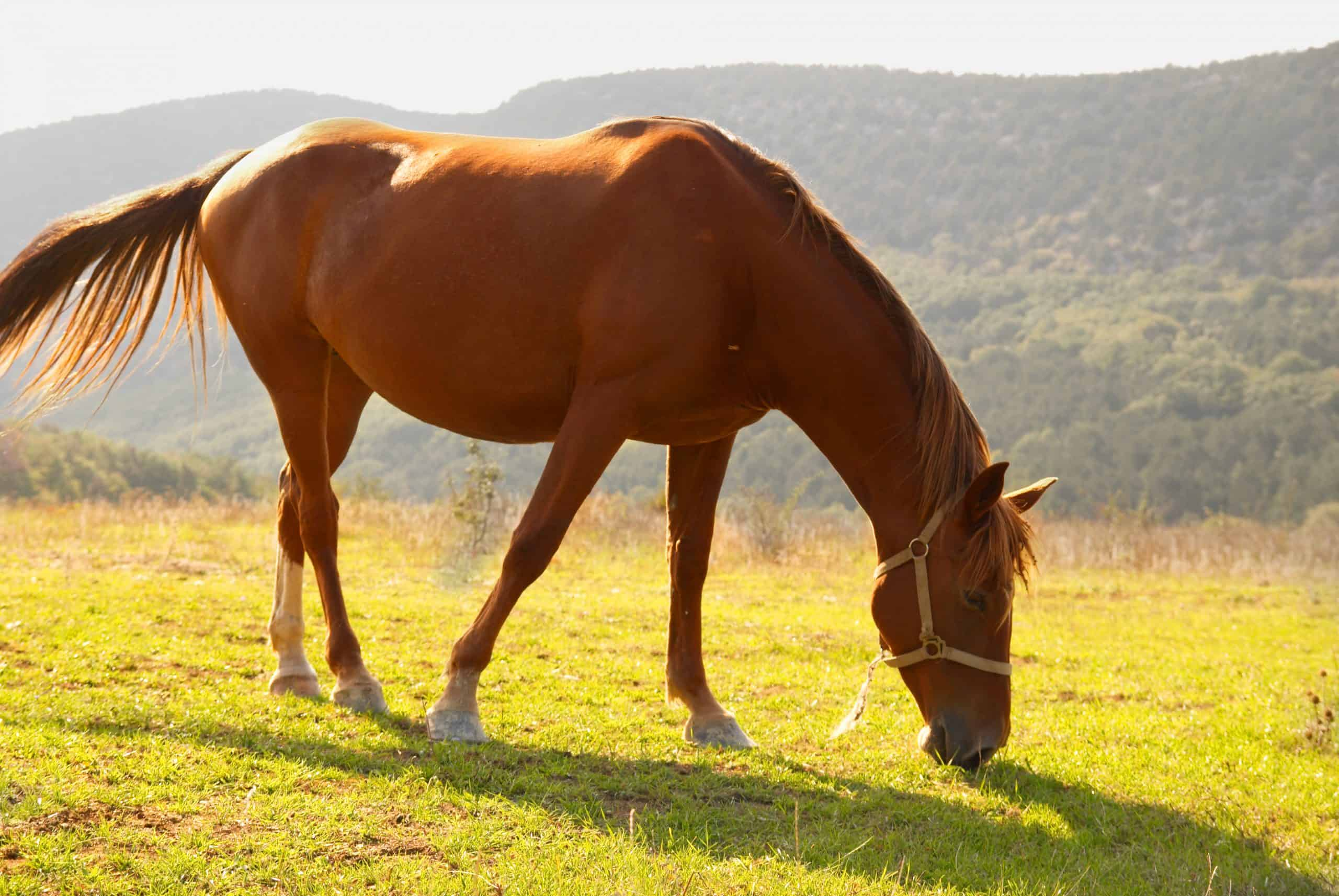 Grazing horse in the field.