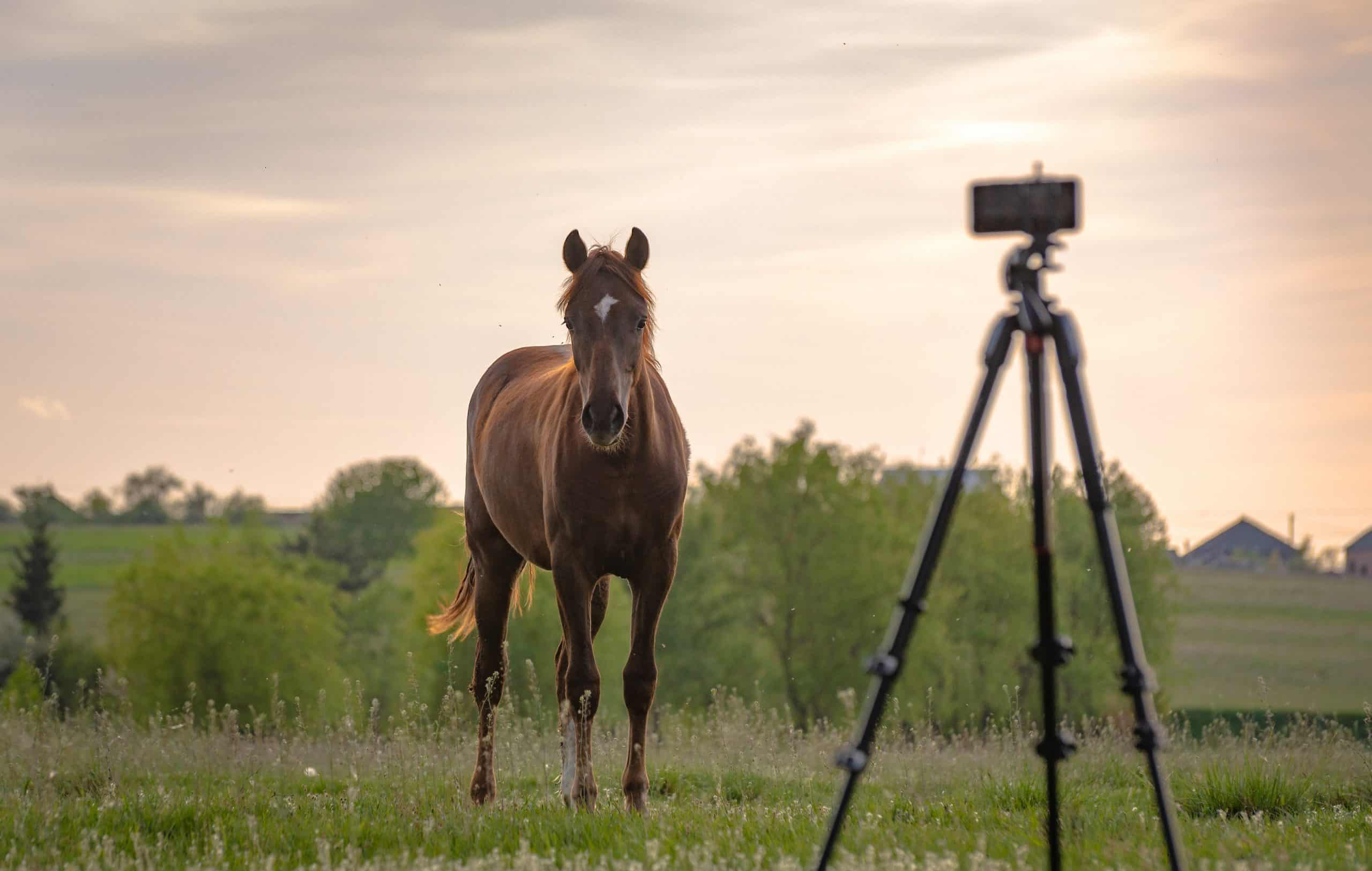 horse picture tips in field