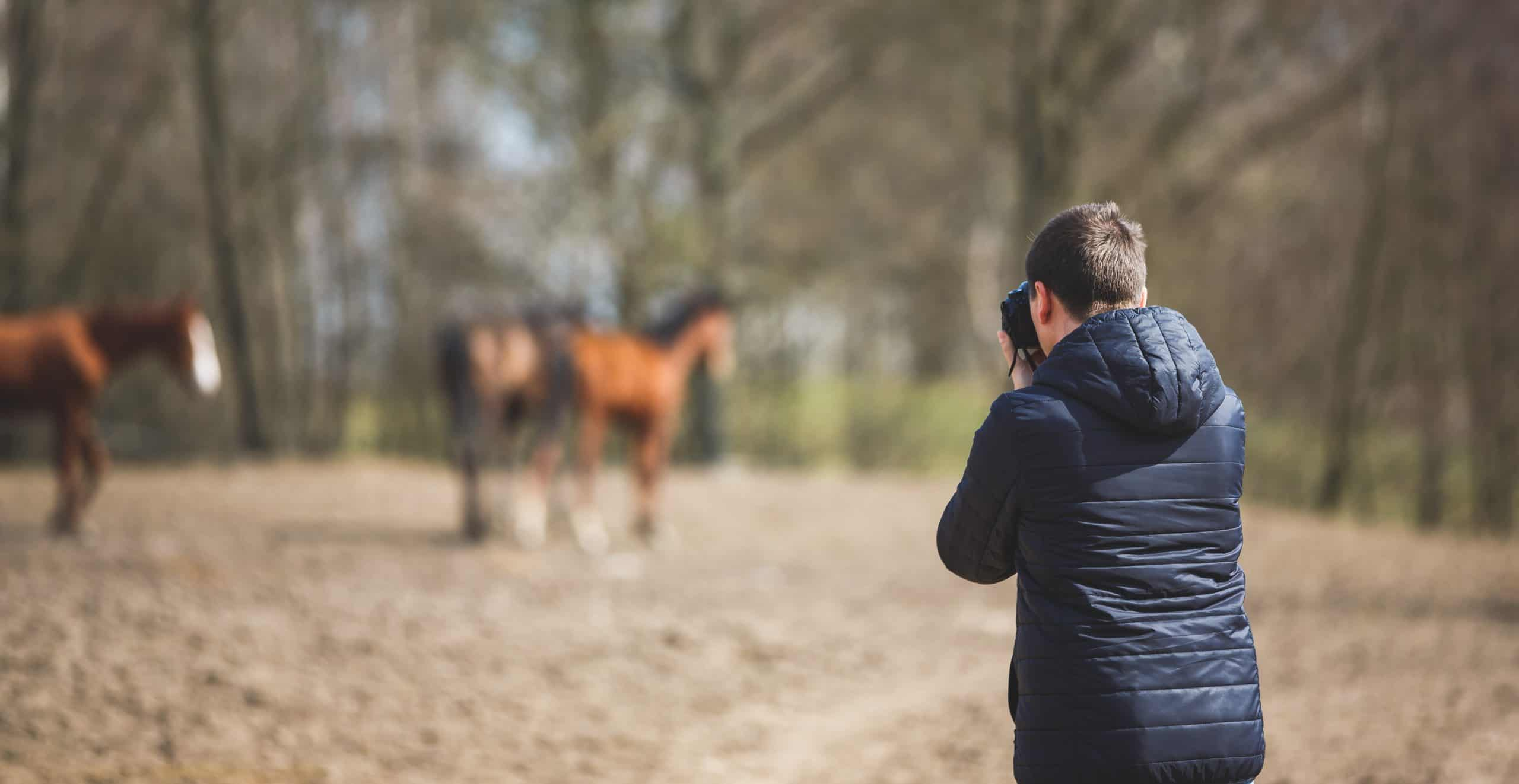 The man takes pictures of horses on the meadow, spring time
