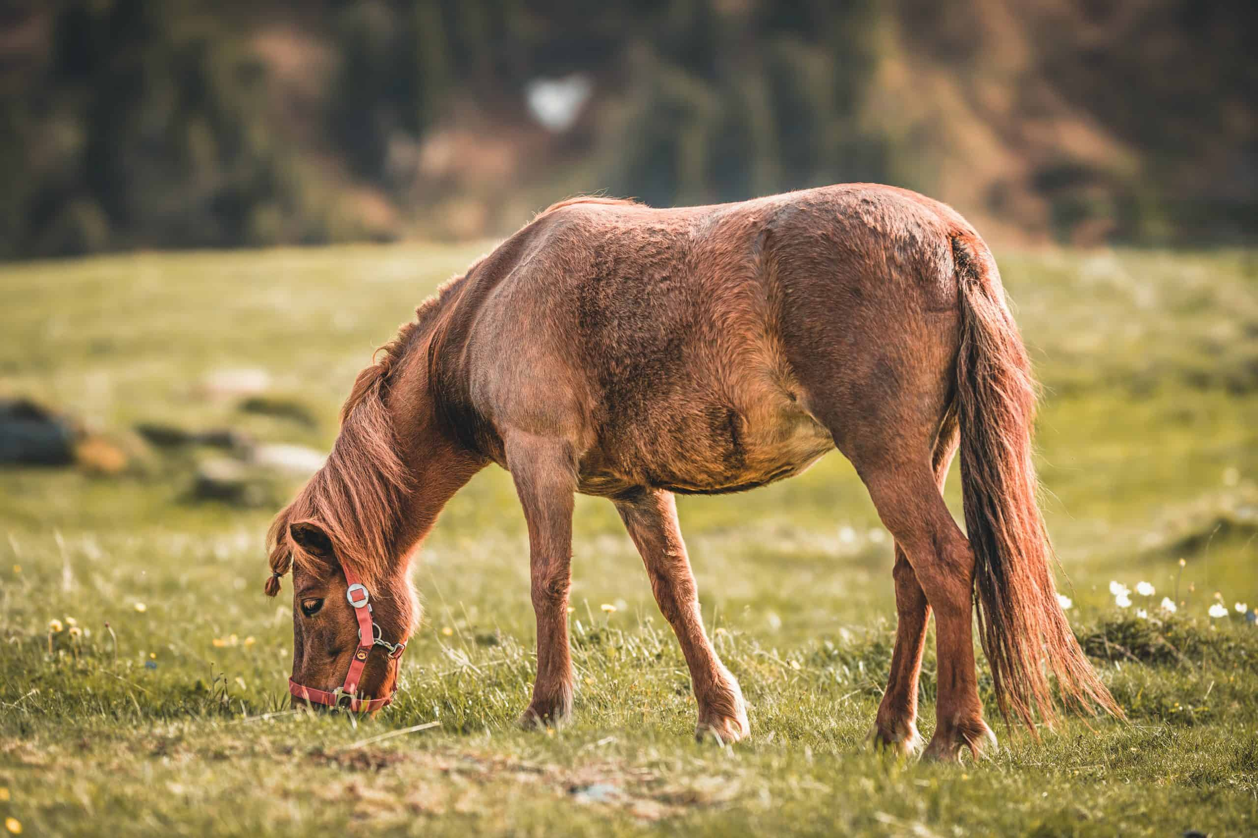 symptoms of ulcers in horses grazing