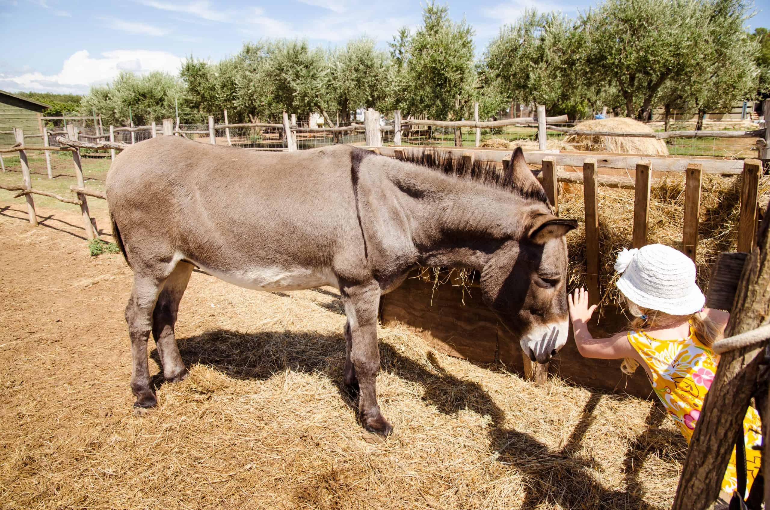 little kid feeding a horse in the farm