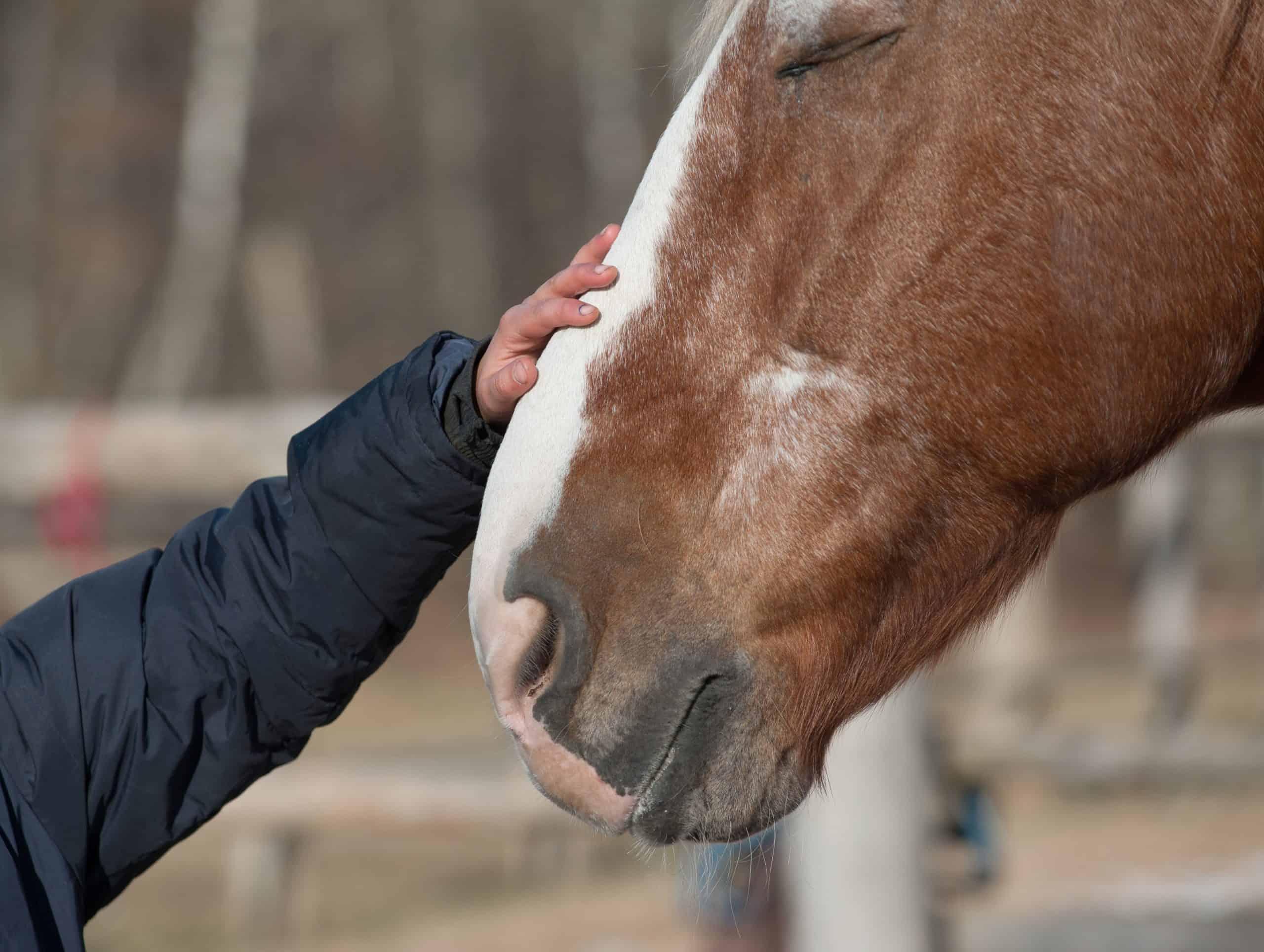 kid hand caressing horse close up