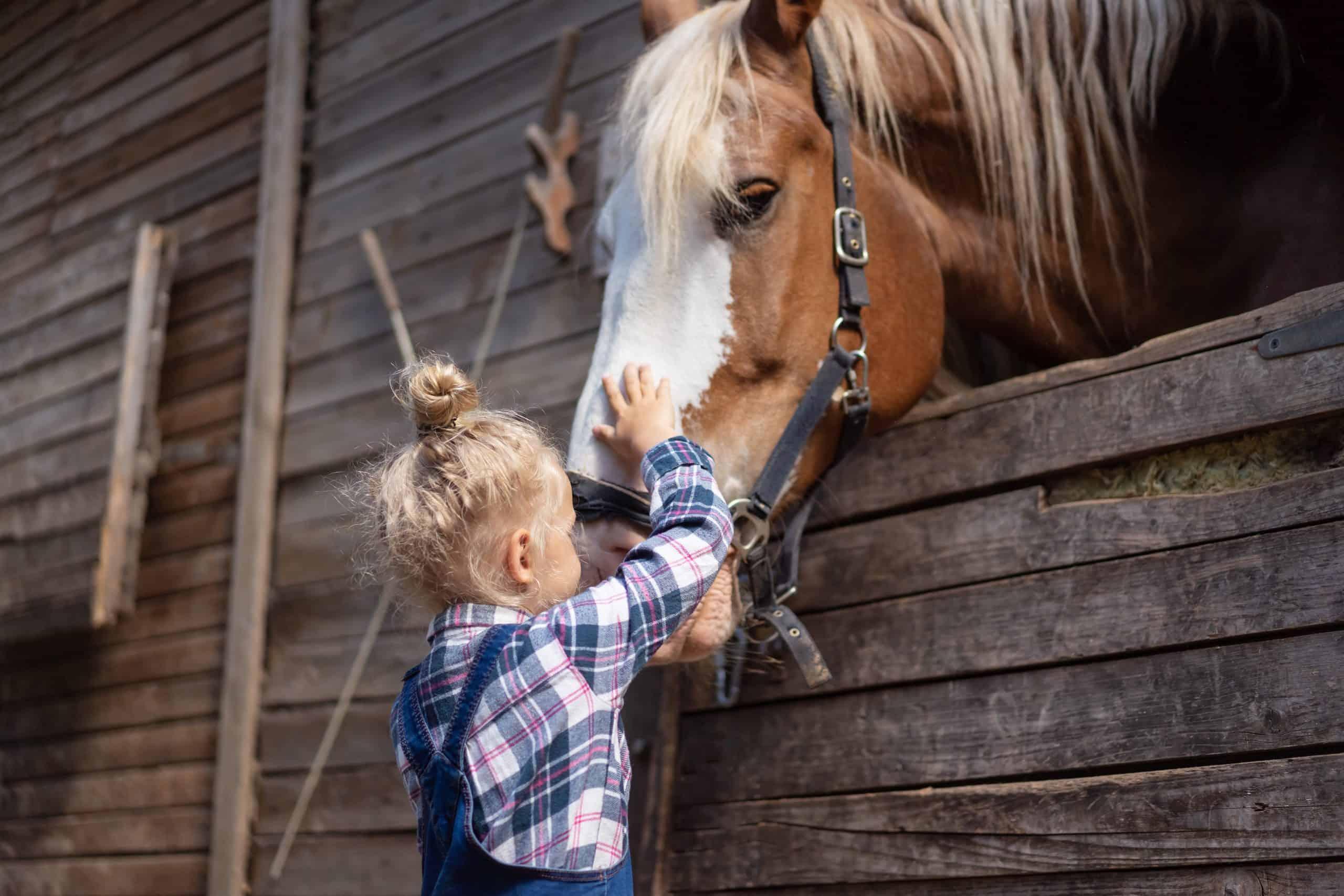 preteen kid palming big horse at farm