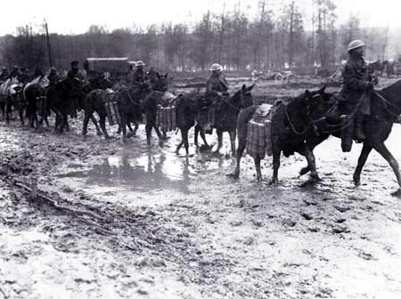 Horses carrying ammunition. Image source: Simon Butler