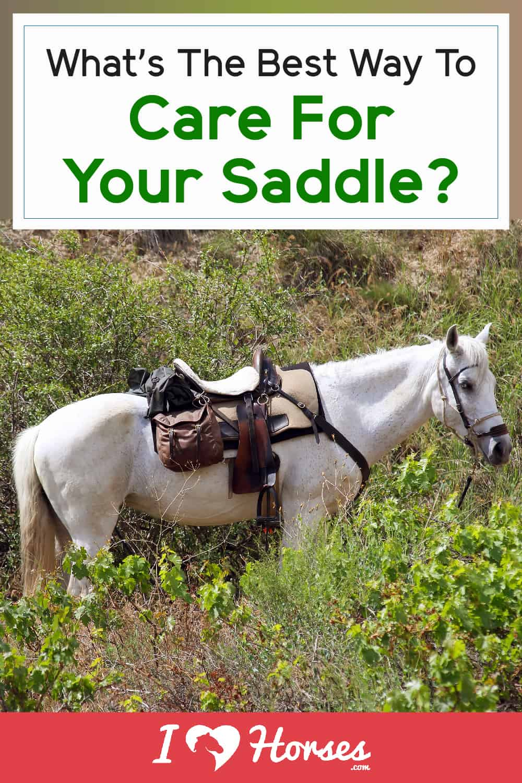 6 Top Saddle Care Tips