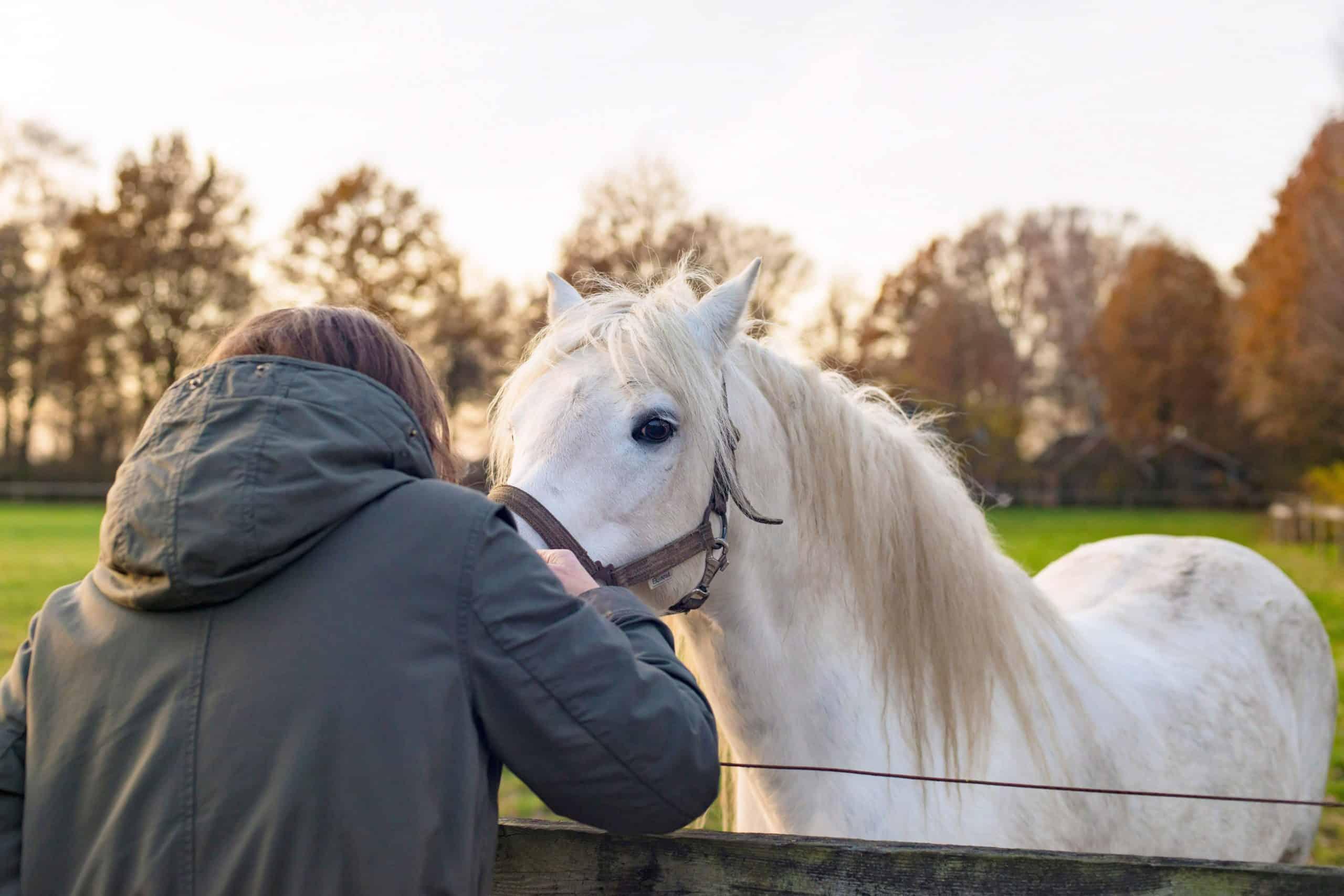 Brunette woman hugging white pony near fence. Rear view.