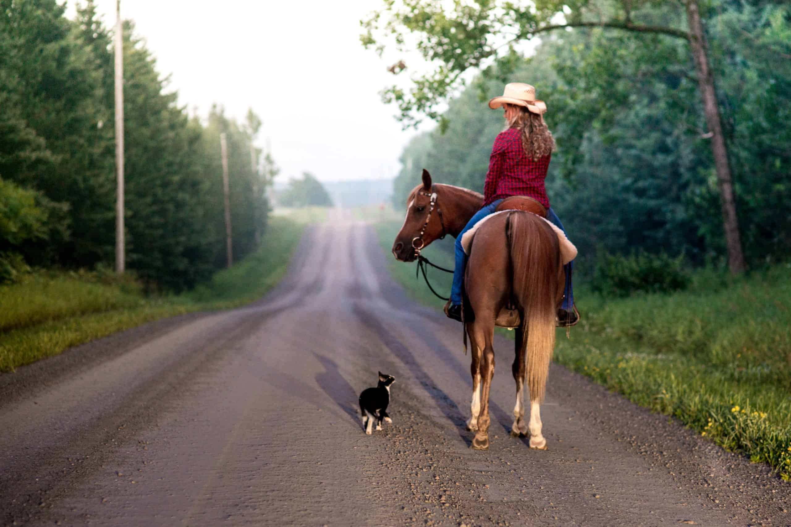 Cat follows Horseback Rider on Country Road in Summer Time
