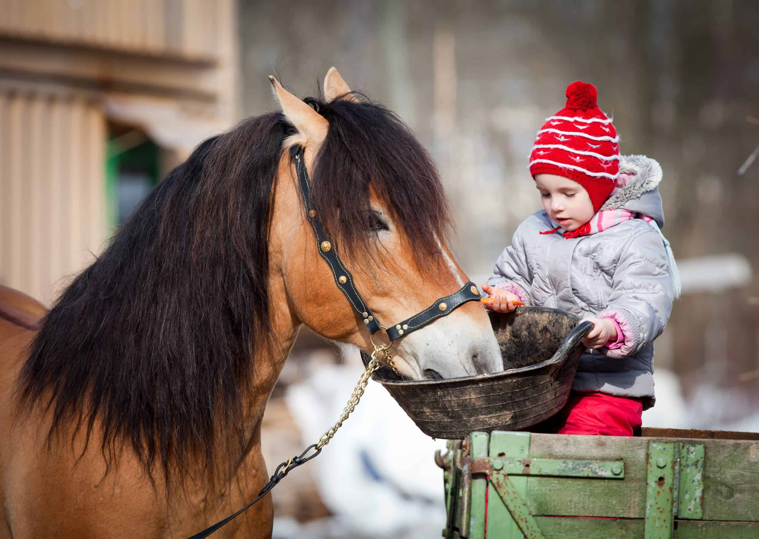 Girl feeding a horse, sitting on a cart in the winter.