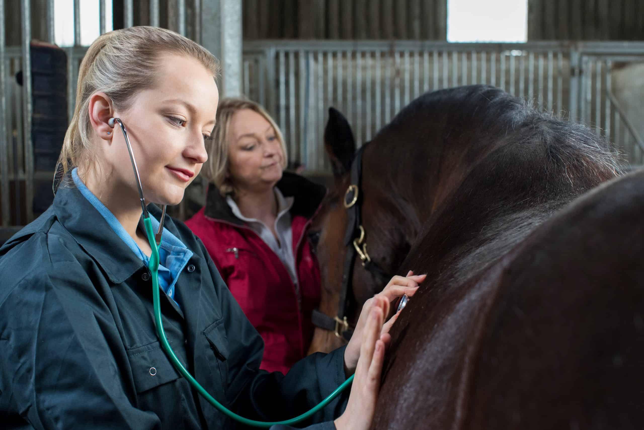 Female Vet Giving Medical Exam To Horse In Stable help horse live longer