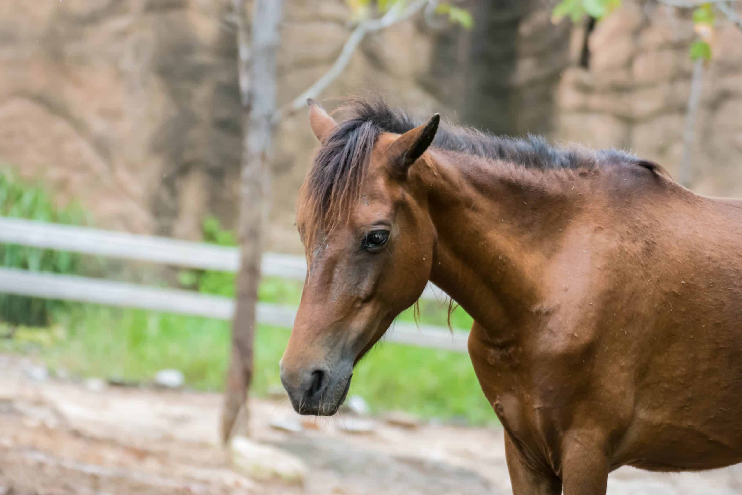 Horse horses sick sick Feathers and mane infested diseases, parasitic infections, hunger, neglect, infection in the legs and eyes, standing on wet and dirty surfaces.