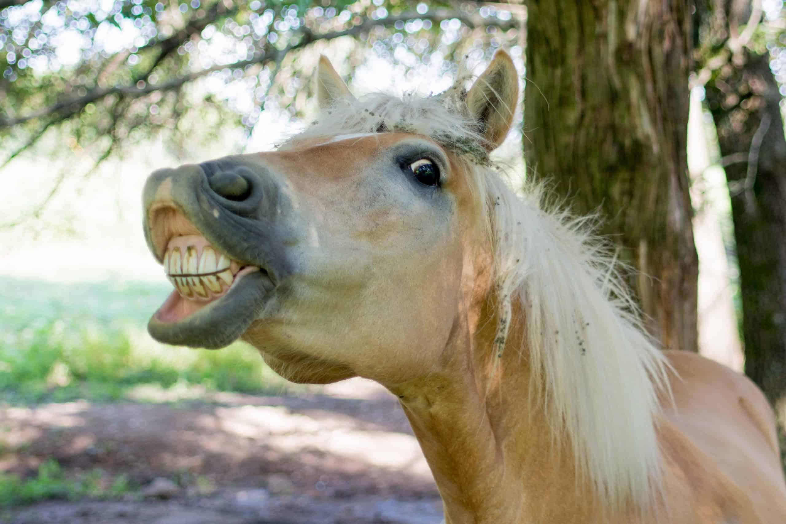 4 Reasons Why Horses Show Their Teeth