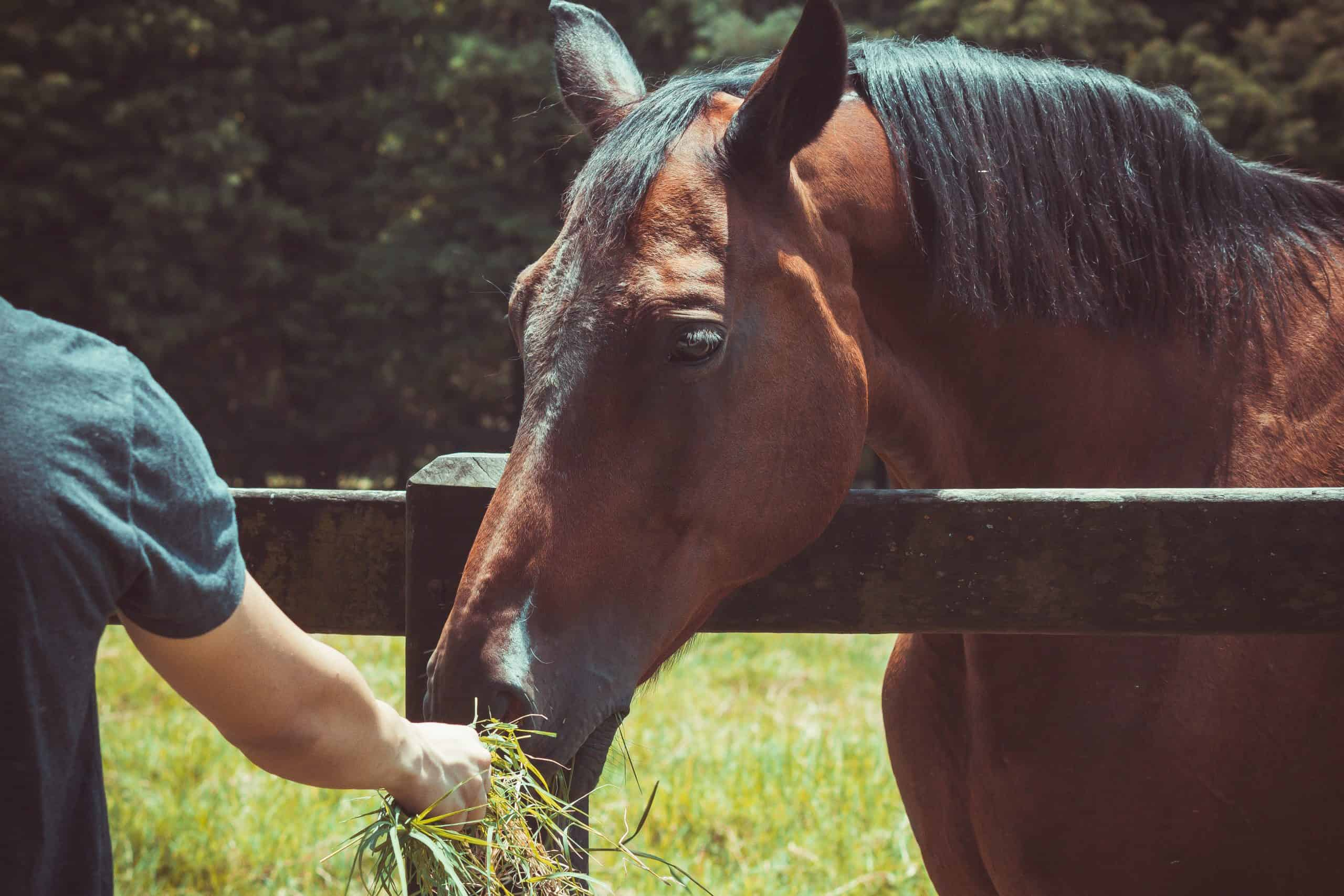 horse colic prevention tips