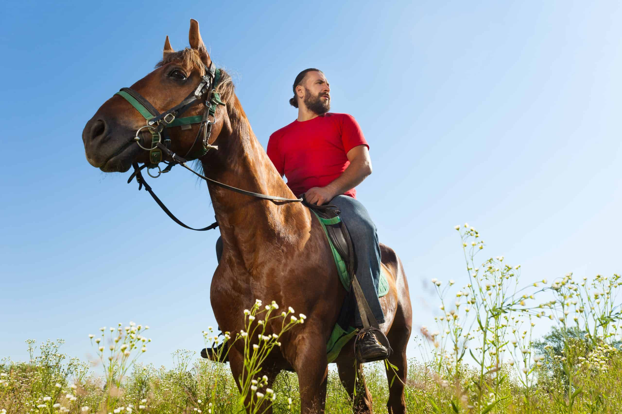 Portrait of horseback rider at the field in summer against blue sky